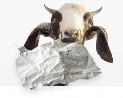 goat eating paper