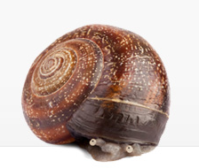 snail in a shell