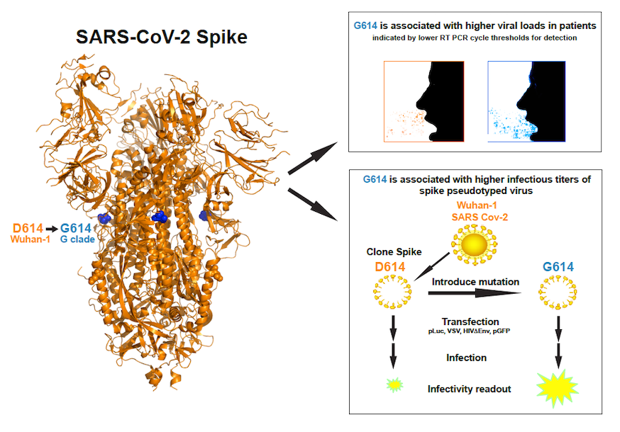 New COVID-19 Variant More Infectious, May Not Make You Sicker
