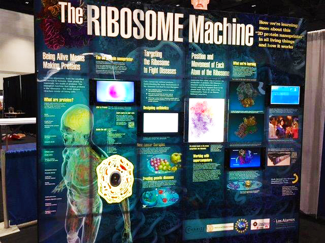 ribosomes exhibit