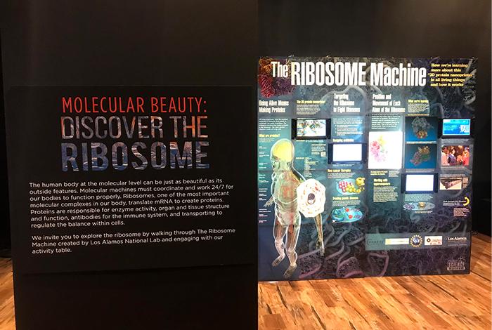 ribosome-home